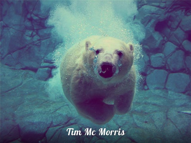 We re Going Up (с рекламы банка) Tim Mc Morris